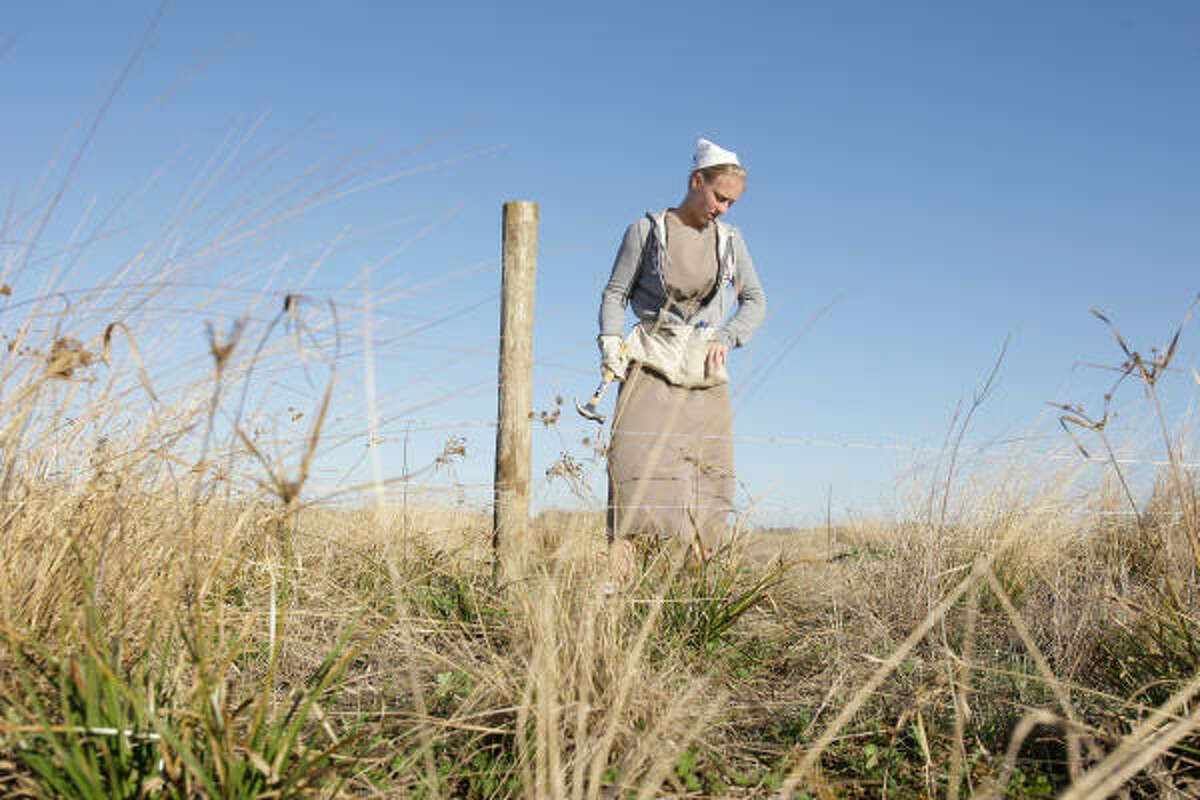 Rosanna Troyer, 17, of Bremen, Ind., works on a fence at Morris Farms in Double Bayou, Chambers County, on Wednesday. Troyer is part of an Amish group of volunteers recruited by the Fellowship of Christian Farmers to help rebuild fences destroyed by Hurricane Ike.