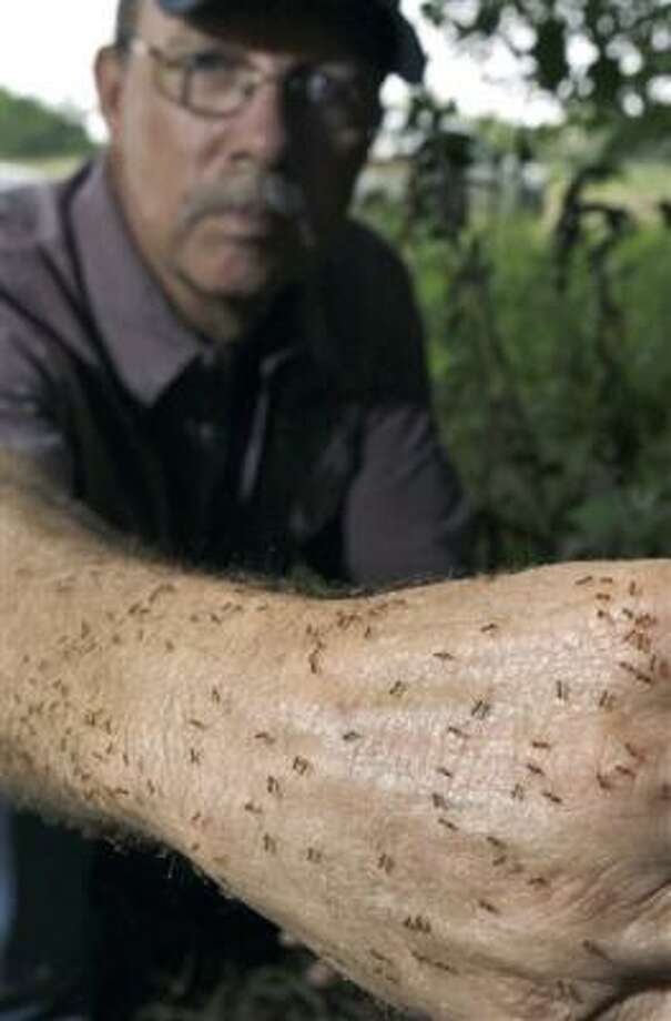 "Tom Rasberry, an exterminator, lets ""crazy rasberry ants,"" named after him, crawl on his arm in Deer Park. Photo: David J. Phillip, AP"