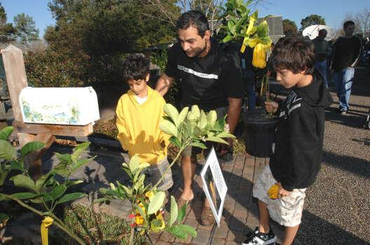 2009 Houston Area Fruit Tree Sales Houston Chronicle
