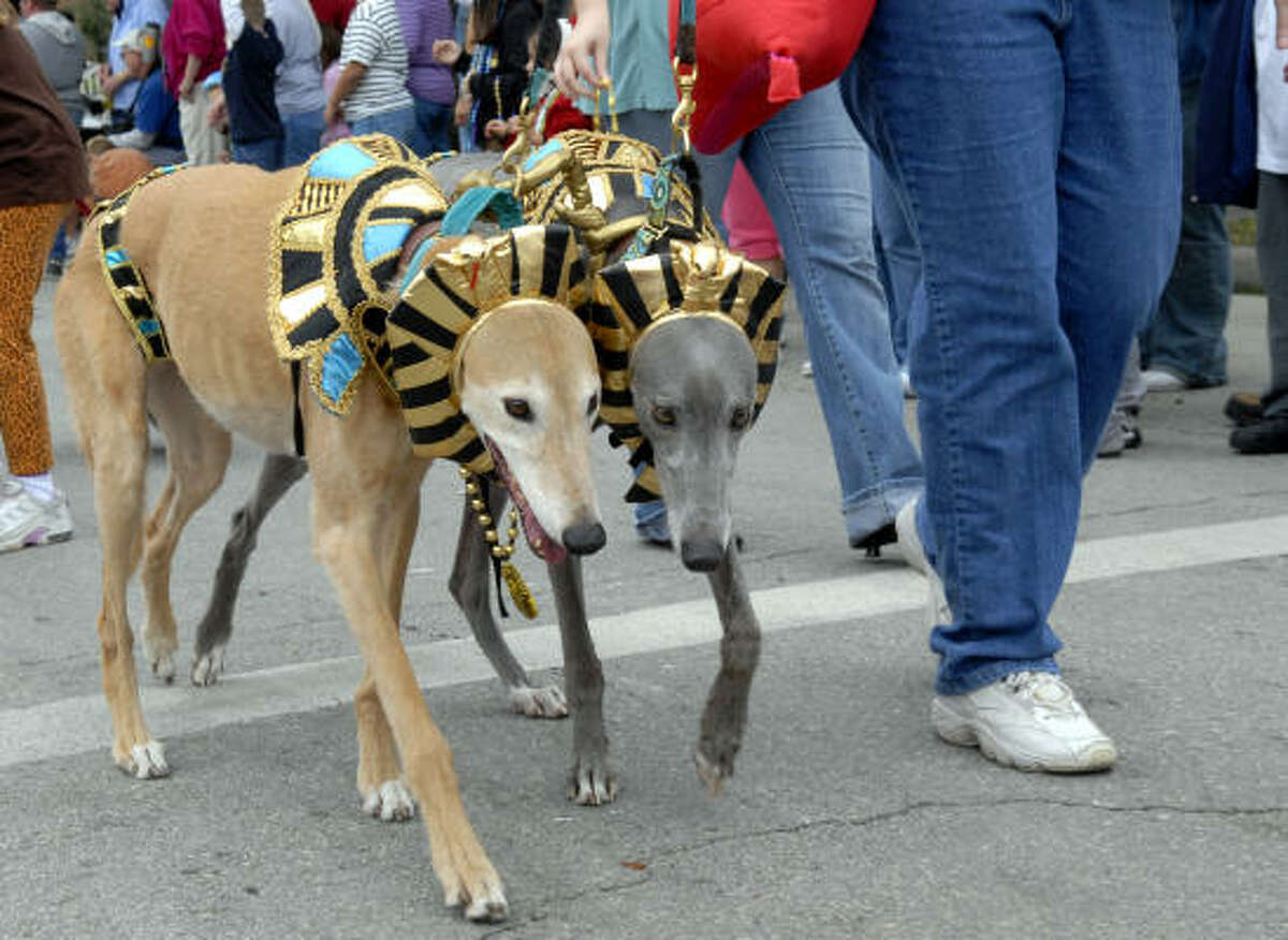 Cruz and Rob dress up at Pharos Hounds during last year's Krewe of Barkus and Meoux Mardi Gras Parade in Galveston.
