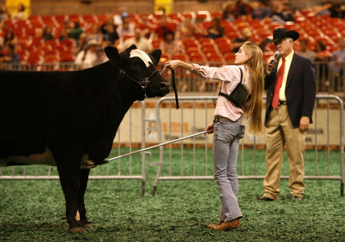 Megan Stammann, 15, shows Coco in the ring for the judge during the scramble heifer show where she came in 5th place at the Houston Livestock Show and Rodeo.