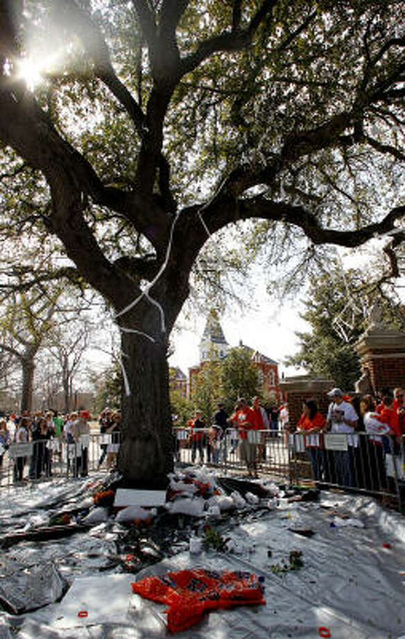 Auburn fans join together to pay respects to the historic trees allegedly poisoned by an Alabama fan. Photo: Butch Dill, AP