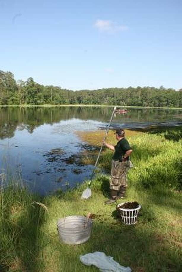On Lake Raven, Stephen Farlow takes a break from removing floating clumps of giant salvinia, a fast-growing invasive plant that can blanket water bodies, choking the life from them. Photo: Shannon Tompkins, Chronicle
