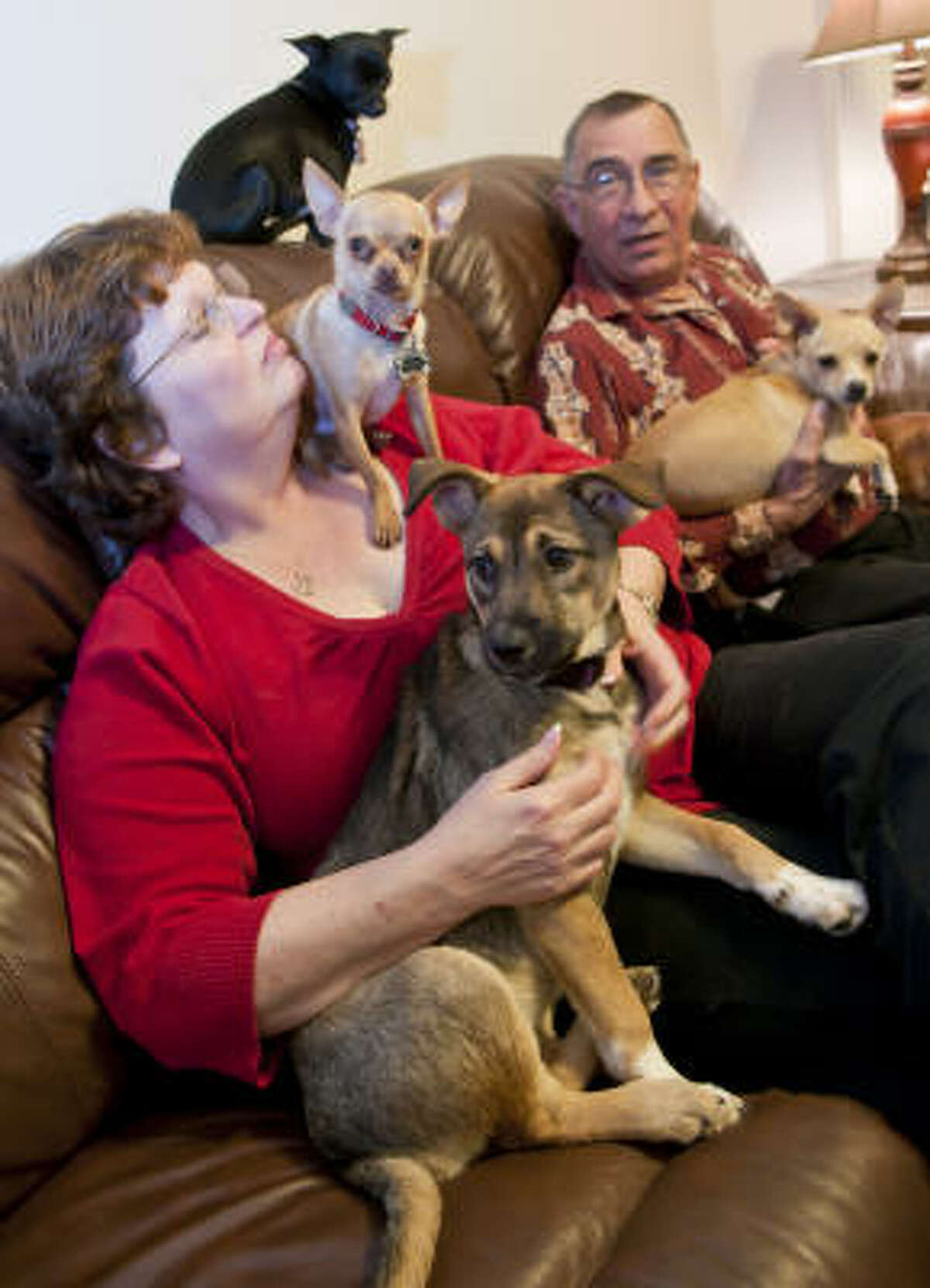 In addition to the four Chihuahuas they own, Cheri and Ronnie Lindsey make time to foster pets in need.