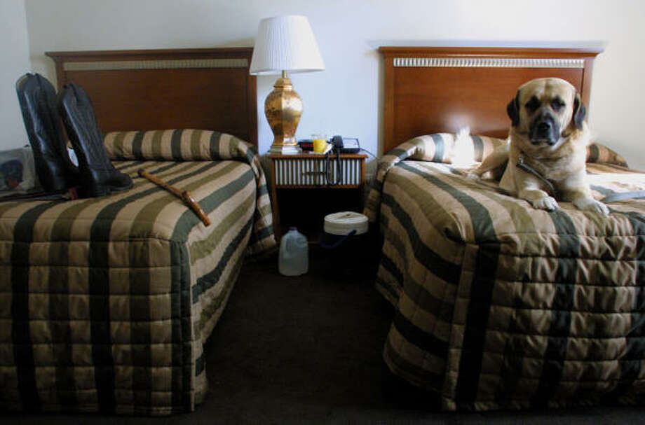 The number of pet-friendly hotels is increasing steadily, a survey found. Photo: TINA FINEBERG, AP
