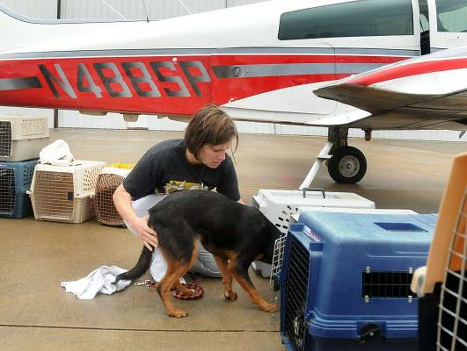 DAVID HOPPER: FOR THE CHRONICLE READY FOR FLIGHT: Angela Jankoski, of The Woodlands, loads her foster dog, Samantha, into a portable kennel during the recent Operation Pets Alive Flight for Life program. The nonprofit rescued 22 dogs from shelters in Montgomery County and arranged with Cloud 9 Rescue Flights to fly the dogs to New Hampshire to be adopted. Photo: David Hopper, For The Chronicle