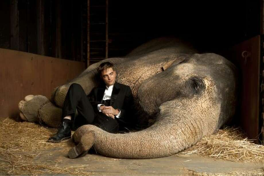 One of Robert Pattinson's leading ladies in Water for Elephants was Tai. Photo: Fox Pictures