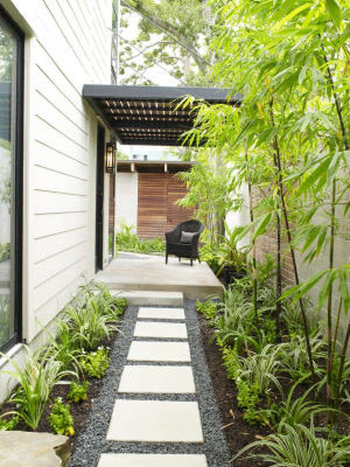 Black bamboo accents a side entry garden. Photo: Ralph Smith Photography