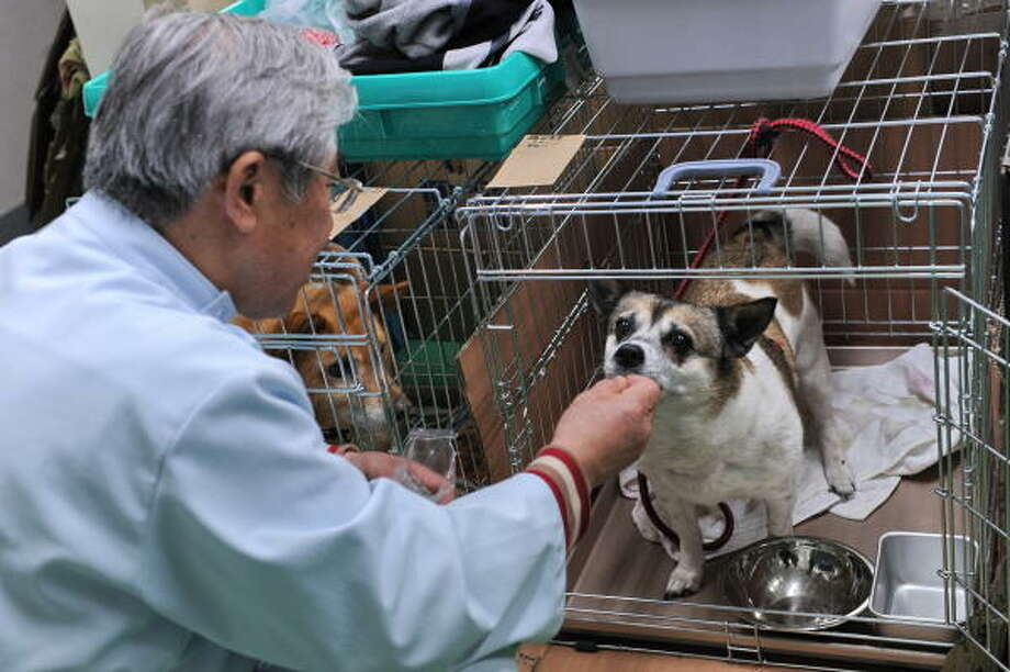 Veterinarian Yuzou Taguchi feeds a dog at a temporary animal shelter at the fishing port in Miyako. Hundreds of family pets are struggling to survive. Photo: ROSLAN RAHMAN, AFP/Getty Images