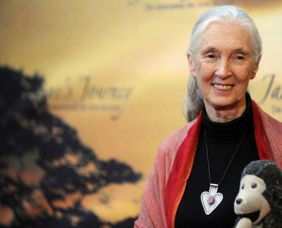 Behavioral scientist Jane Goodall, who studies chimps in Tanzania, will speak at the Progressive Forum on March 9. Photo: Berthold Stadler, Associated Press