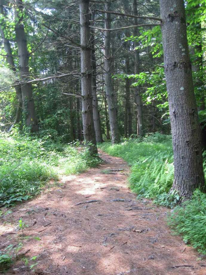 A carpet of pine needles covers a trail that winds into a forested section of Brett Woods Open Space. Pieced together from multiple parcels, the full tract is 185 acres, making Brett Woods the town's largest open space. Photo: Contributed Photo / Fairfield Citizen contributed