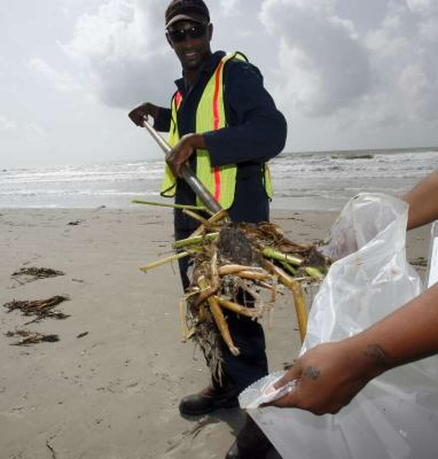 Workers scoop up fresh-water plants coated with what officials have identified as a hydrocarbon in Galveston on Friday. Photo: Jennifer Reynolds, Galveston County Daily News