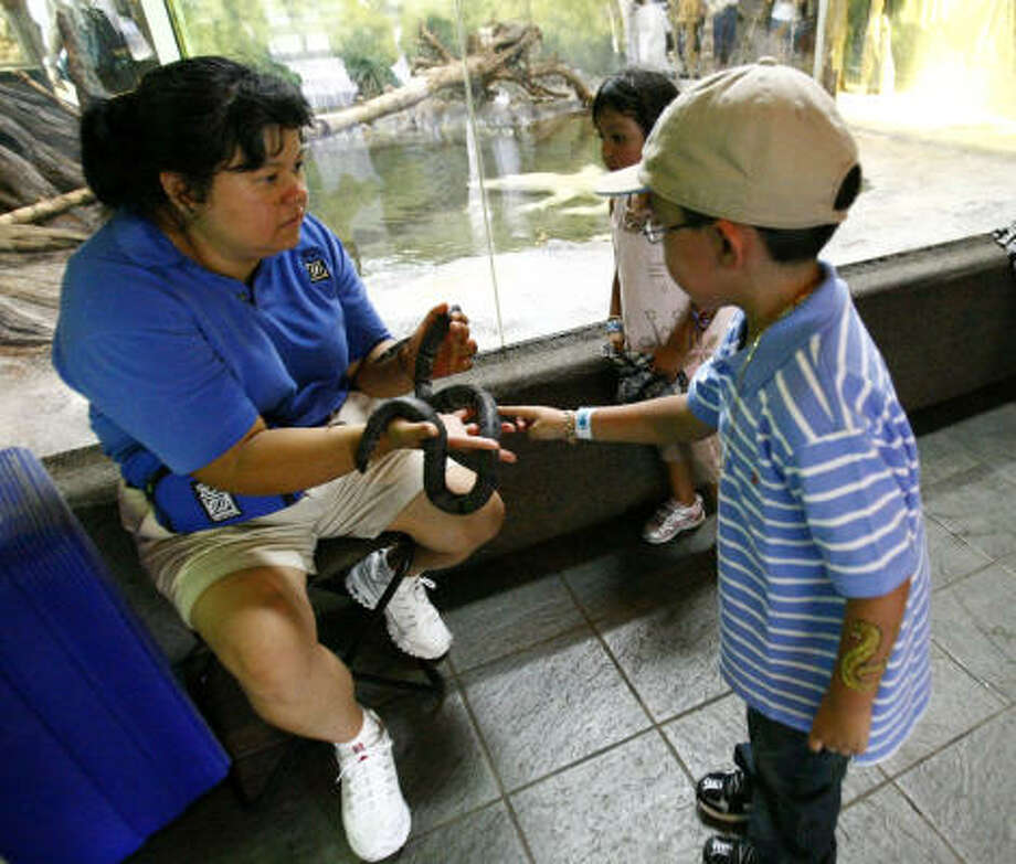 Carlos Barahona, 6, pets a Gray-Banded Kingsnake held by volunteer Laura Tunstall at the Houston Zoo on Saturday. Photo: Karen Warren, Chronicle