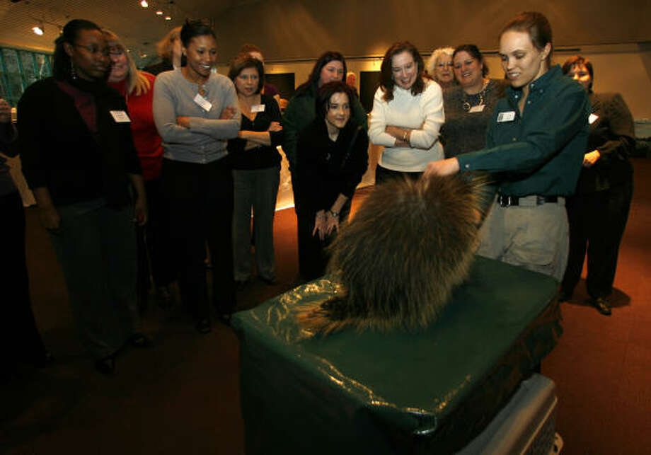 Zookeeper Callian Sheppard introduces Ernie the porcupine to those at a recent BenefitSpecialists compliance seminar at the Houston Zoo. Photo: Karen Warren :, Chronicle