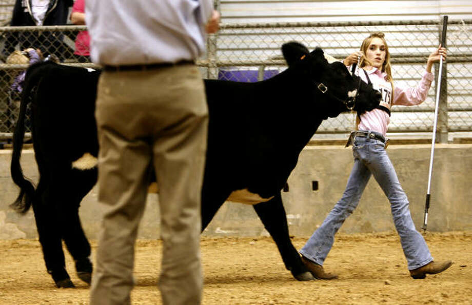 Megan Stammann walks her heifer, Coco, past the judge in October 2009 during the scramble progress show in Humble. She took third place in her category. Photo: Karen Warren, Chronicle