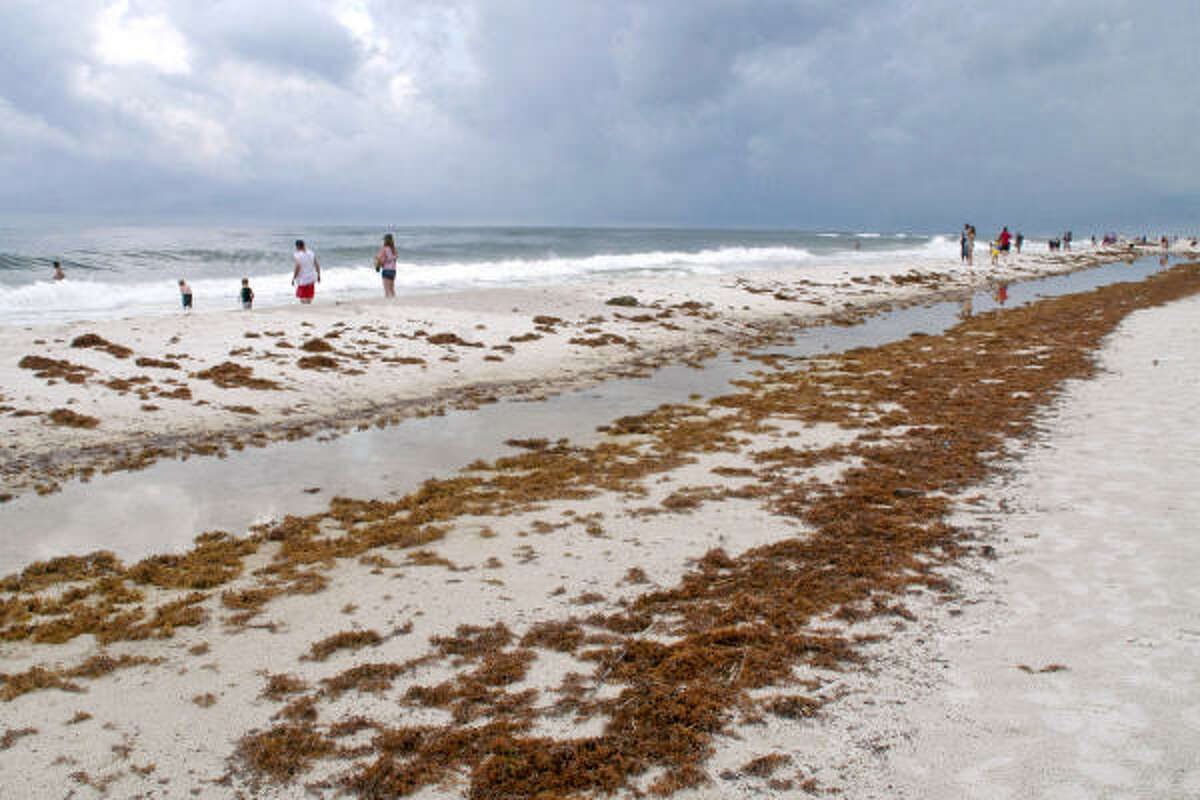 Seaweed covered in oil from the Macondo well sits on a public beach in Gulf Shores, Ala., earlier this month.