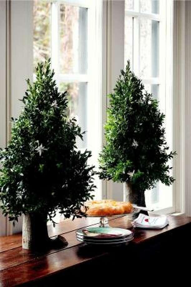 Make A Mini Tree From Fresh Greenery Houston Chronicle