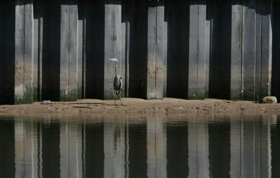 A heron stands on the banks of Buffalo Bayou. The waterway is the subject of a poem by Larry D. Thomas, 2008 Texas poet laureate, that appears in Literary Houston. Photo: Mayra Beltran, Houston Chronicle