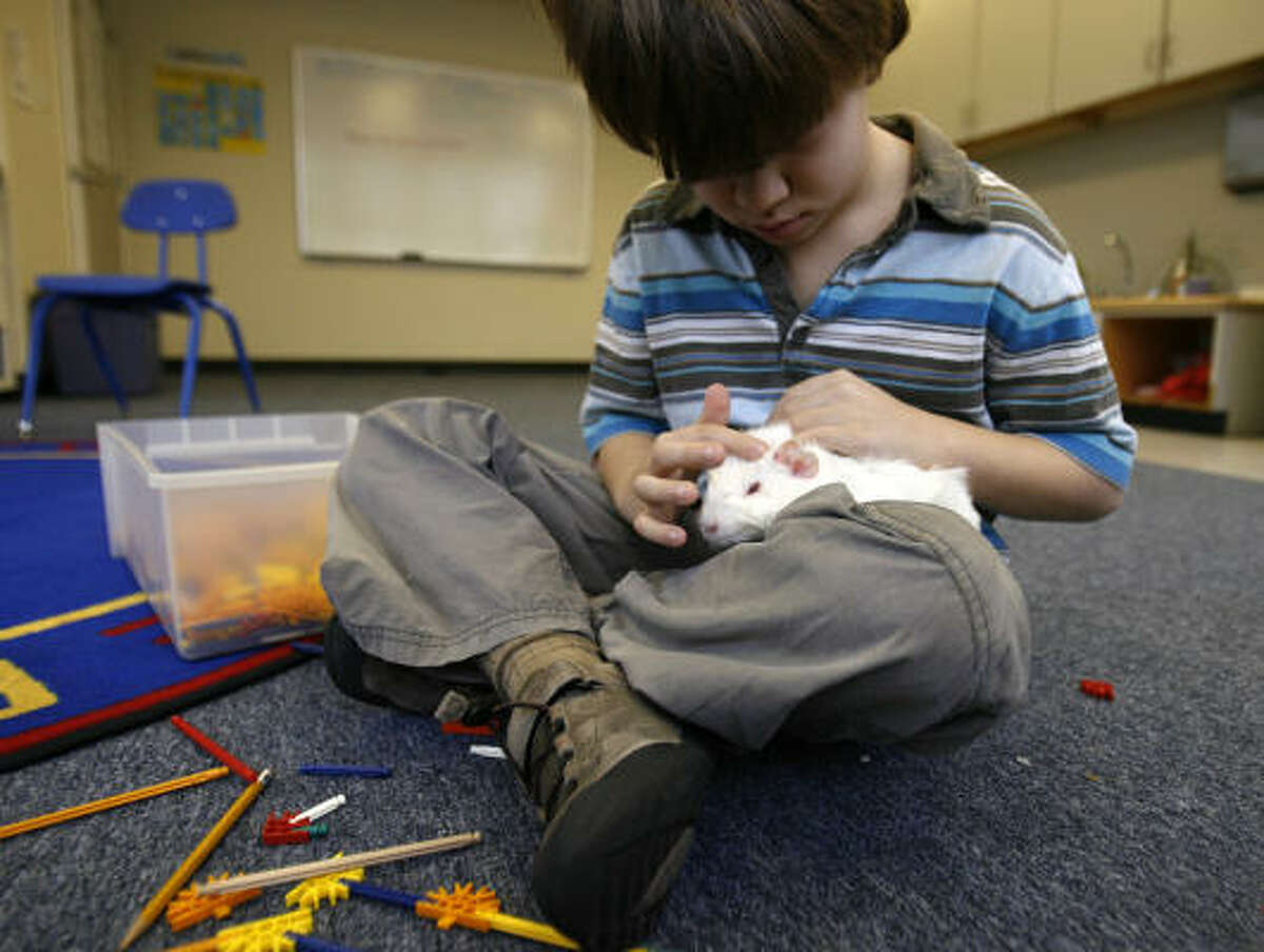 Ryan Elliott, 7, pets Scrambles the guinea pig at The Harris School. Students with emotional issues find solace in the small classes and special programs.
