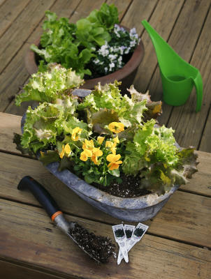 Salad bowls grow lettuce in containers houston chronicle - Salads can grow pots eat fresh ...