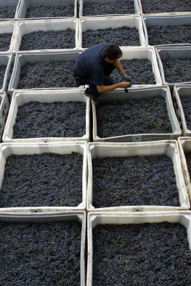 Argentina's grapes are going global: The fifth-biggest wine producer in the world, clustered largely in leafy vineyards around the semi-arid western province of Mendoza, is cranking out wines to capture export markets. Photo: NATACHA PISARENKO, ASSOCIATED PRESS
