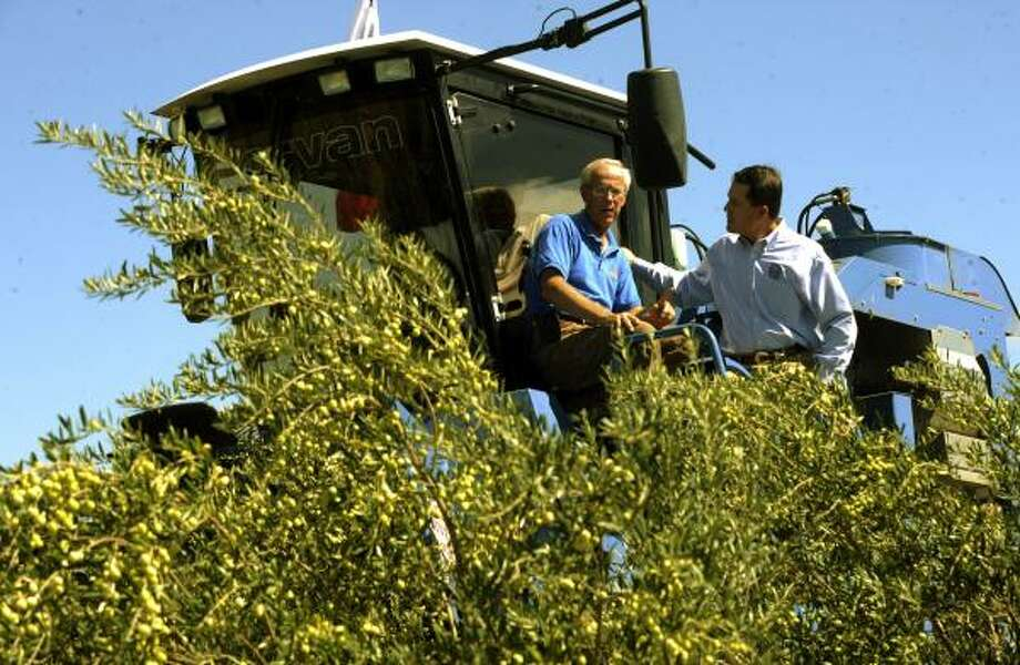 """Jim Henry of the Texas Olive Ranch, left, speaks with Todd Staples, Texas commissioner of agriculture, atop an olive harvesting machine in a grove near Carrizo Springs. """"This is probably a once-in-a-lifetime crop,"""" Henry says. Photo: BILLY CALZADA:, Express-News"""