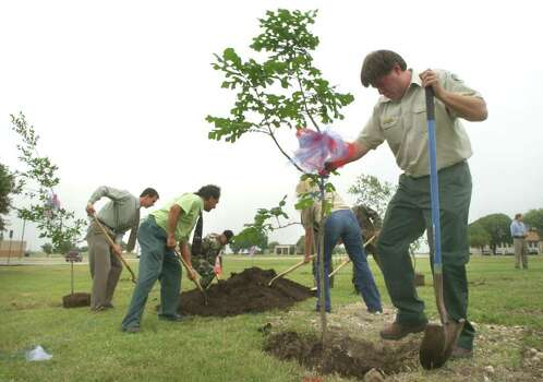 Metro daily - Mark Peterson, right, of the Texas Forest Service, sets an oak tree during the Earth Day tree planting honoring the seven astronauts of the Columbia Space Shuttle, at the Challenger Learning Center at Brooks City-Base.  Tuesday, April 22, 2003.  photo Bob Owen Photo: BOB OWEN, SAN ANTONIO EXPRESS-NEWS / SAN ANTONIO EXPRESS-NEWS