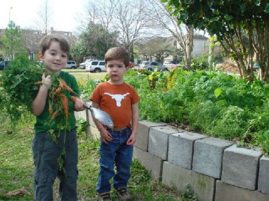 Carrot Farmers At Meredith Gardens, A Community Garden, At Mandell Park In  Houston.