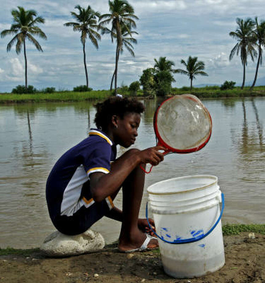 "Perched on a rock, Minverva Joseph, 14, uses a strainer to catch ""Trini"" for sale at a market. This river is believed to be contaminated and contributed to an outbreak of cholera in Haiti. Photo: CARL JUSTE, MCT"