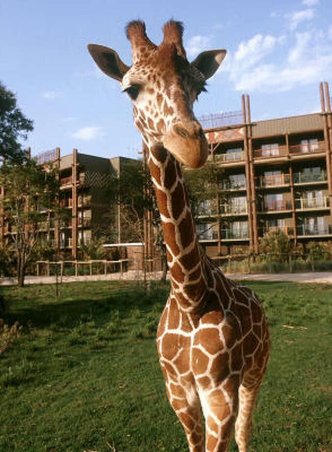 Disney World's Animal Kingdom Lodge. Photo: Disney World