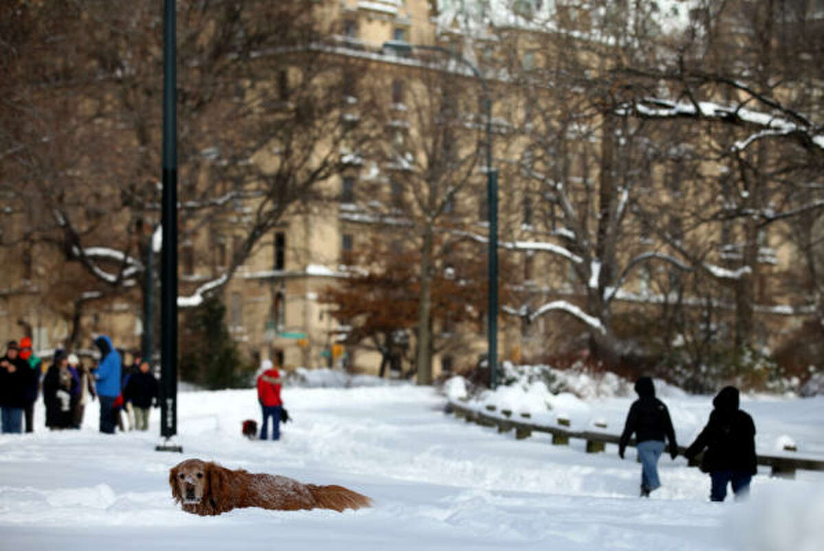 A dog plows through deep snow in New York's Central Park Dec. 27 in the wake of a powerful East Coast blizzard that menaced would-be travelers by air, rail and highway, leaving thousands without a way to get home after the holidays and shutting down major airports and rail lines for a second day.