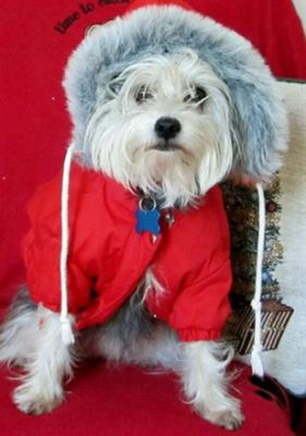 Beanie all dressed up and ready to play in the snow. Share your pet photos.