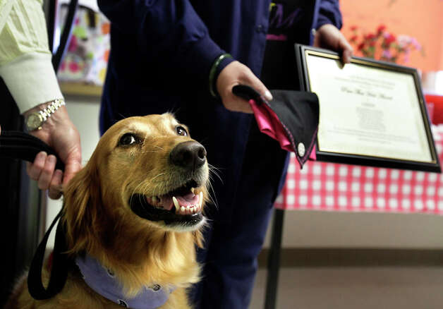 Cindy, a golden retriever, and her owner/handler Suzanne Stanley, were surprised when the Neonatal  Intermediate Care nursing staff of Christus Santa Rosa Children's Hospital made Cindy an honorary nurse. Photo: BOB OWEN / rowen@express-news.net