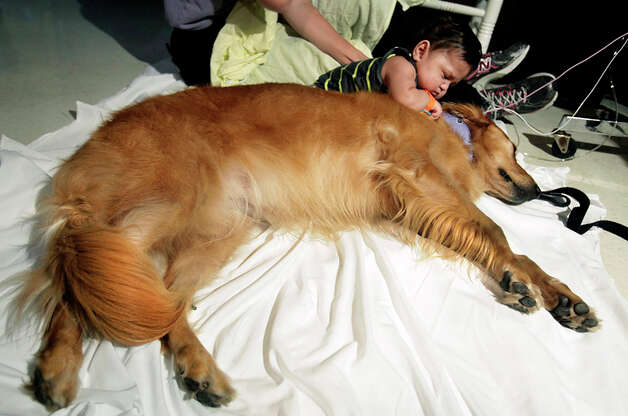 Miguel Pena, 10 months, cuddles with Cindy, a golden retriever, in the Neonatal  Intermediate Care Unit at Christus Santa Rosa Children's Hospital. Cindy and her owner/handler Suzanne Stanley, were surprised when the Neonatal nursing staff made Cindy an honorary nurse. Photo: BOB OWEN / rowen@express-news.net