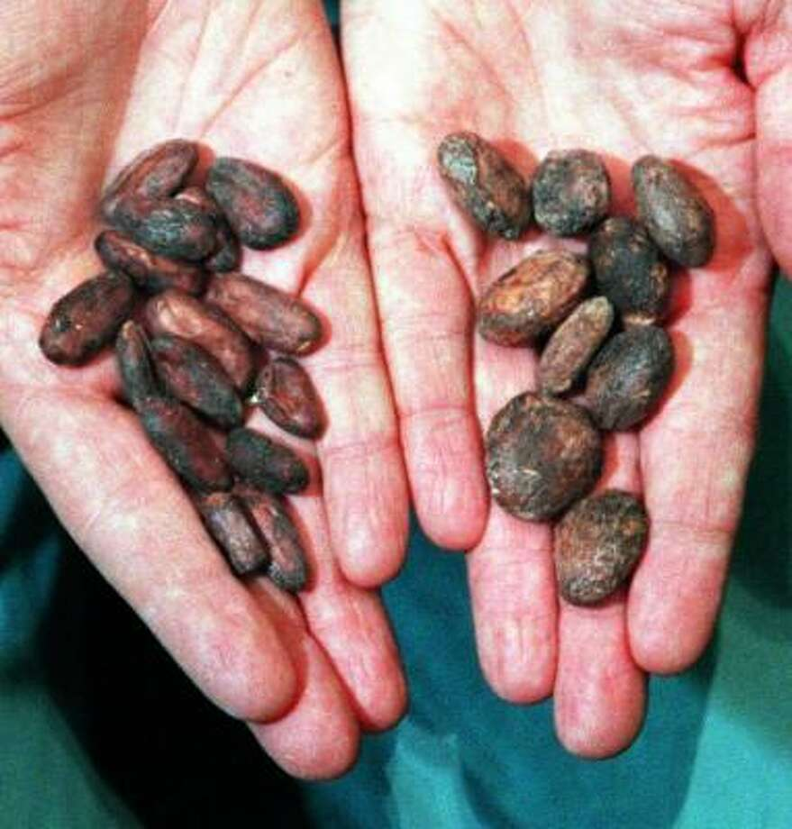 Cupuacu seeds can be found in rain forests. Photo: PAUL TOPLE, AKRON BEACON