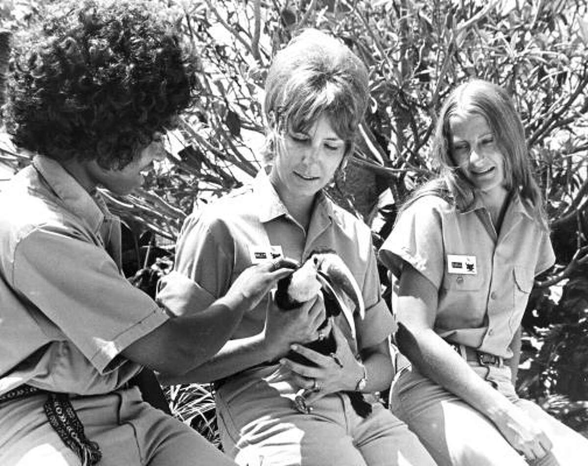 Bird watching is a fulltime job for Busch Gardens staffers Jerry Franklin, left, Sally Chalmers and Carla Taft, but they also have to put in a good deal of time people watching -- for the bird's sake. July 18, 1971.