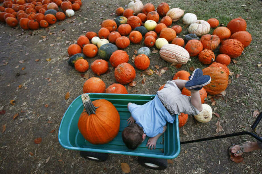 Thomas Wade, 2, leans over a little too far as he looks into his wagon while searching for the perfect pumpkin to take home at the 9th annual Pure Pumpkin Patch at St. Luke's United Methodist Church front lawn Monday, Oct. 25, 2010, in Houston. The pumpkin patch is sponsored by the Pure Sound Youth Choir at St. Luke's United Methodist Church with funds going towards travel expenses for the choir's biannual tour. Photo: Michael Paulsen, Houston Chronicle