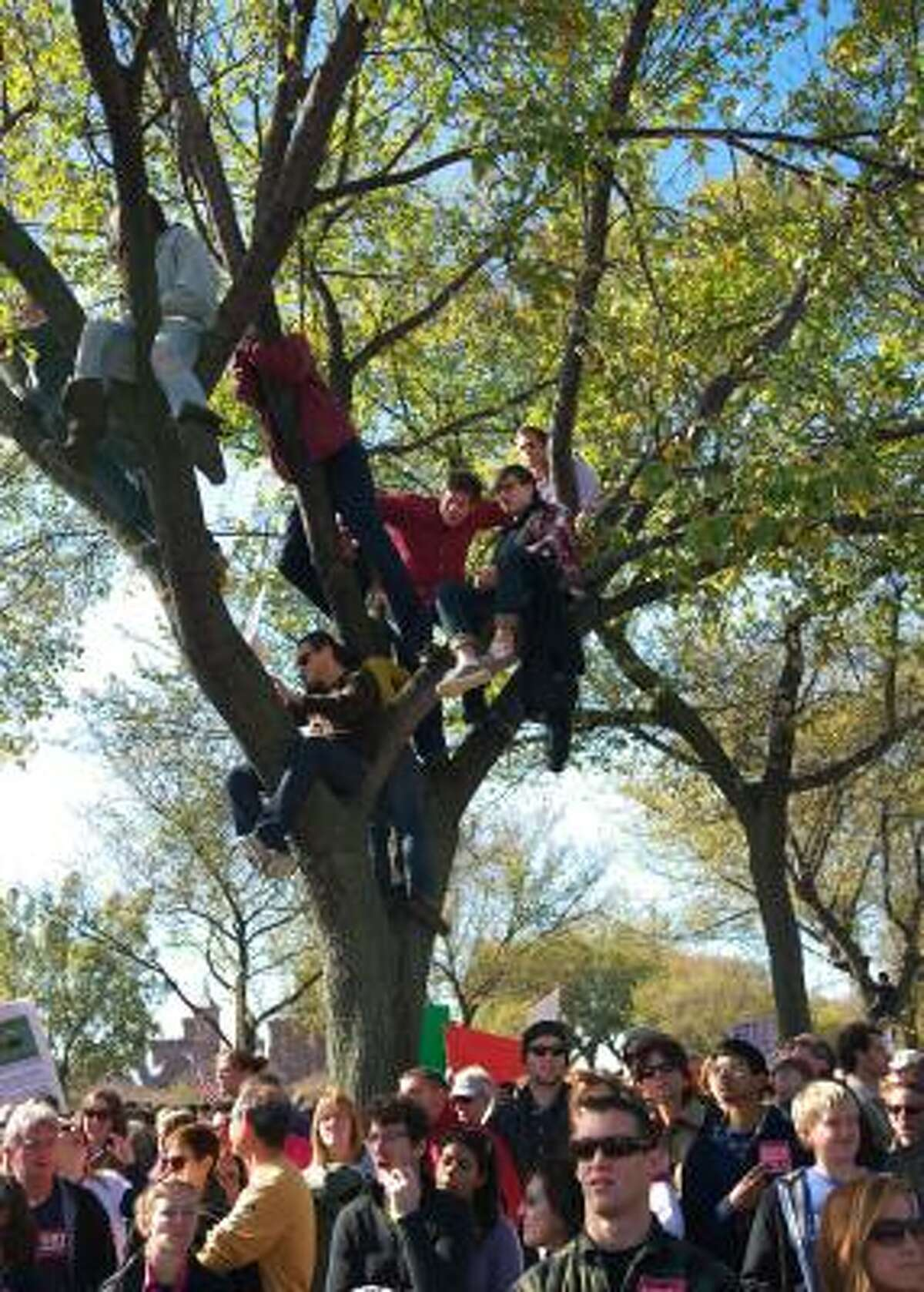 People attending the rally watch from a tree.