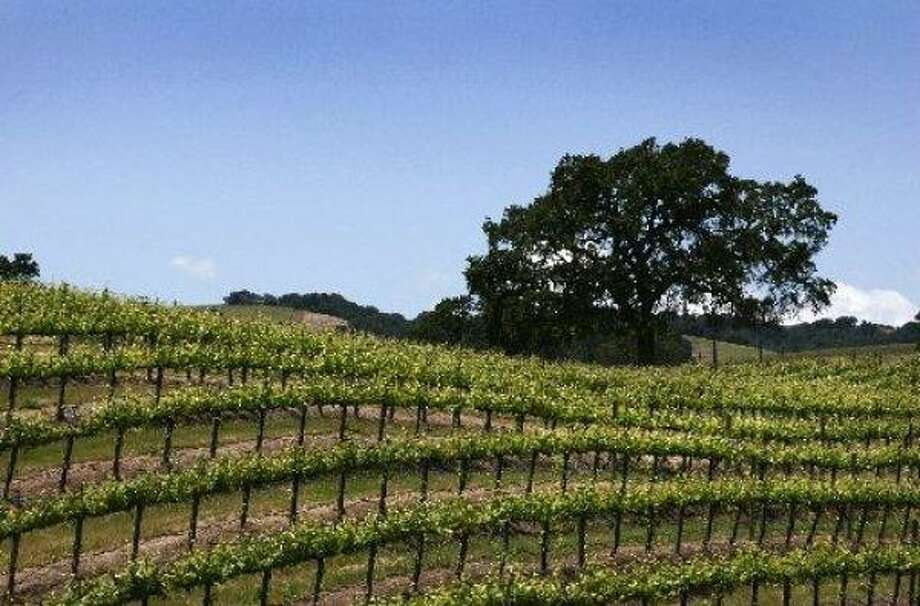 Paso Robles, Calif., is becoming a popular spot for wine tourism. Photo: RON BEZ