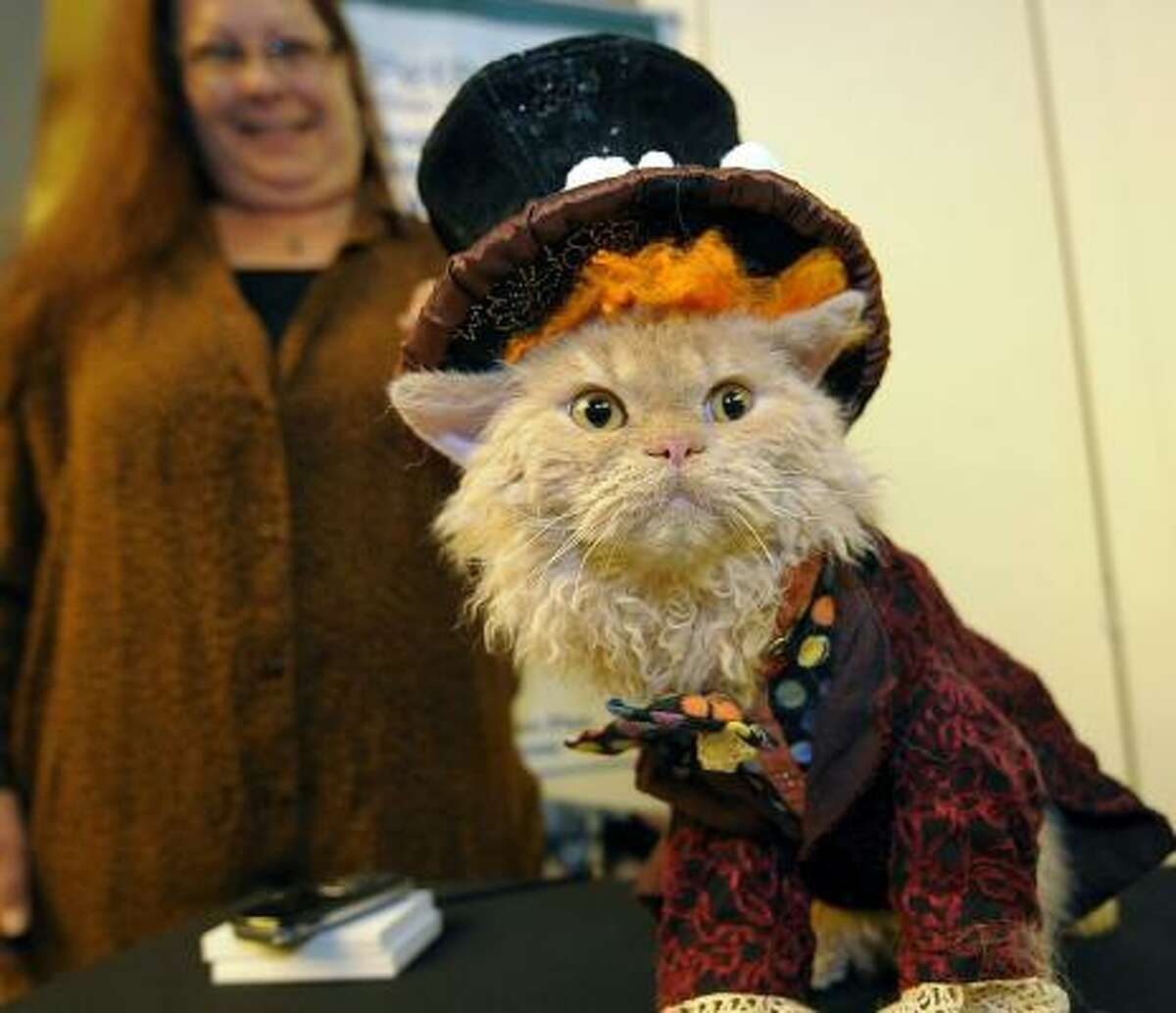 Starting off the show: an American Curl Cat dressed as a magician.