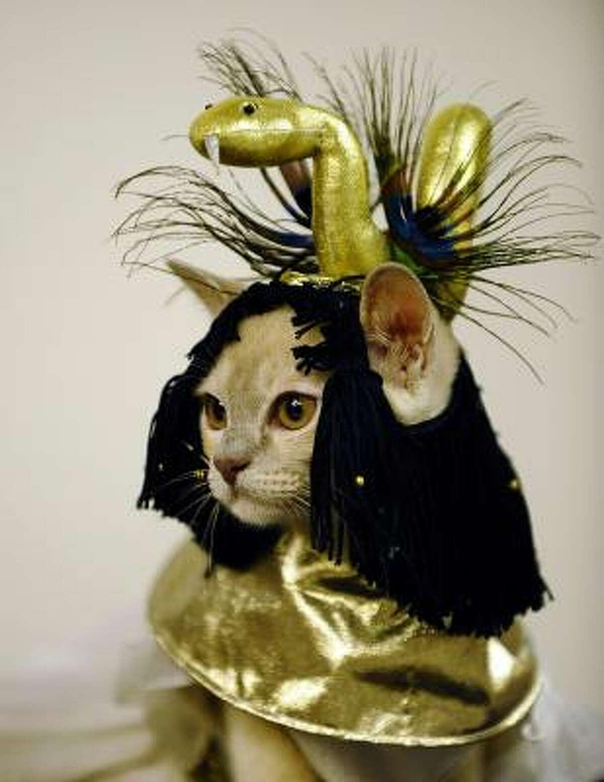 Talk about cat fancy.