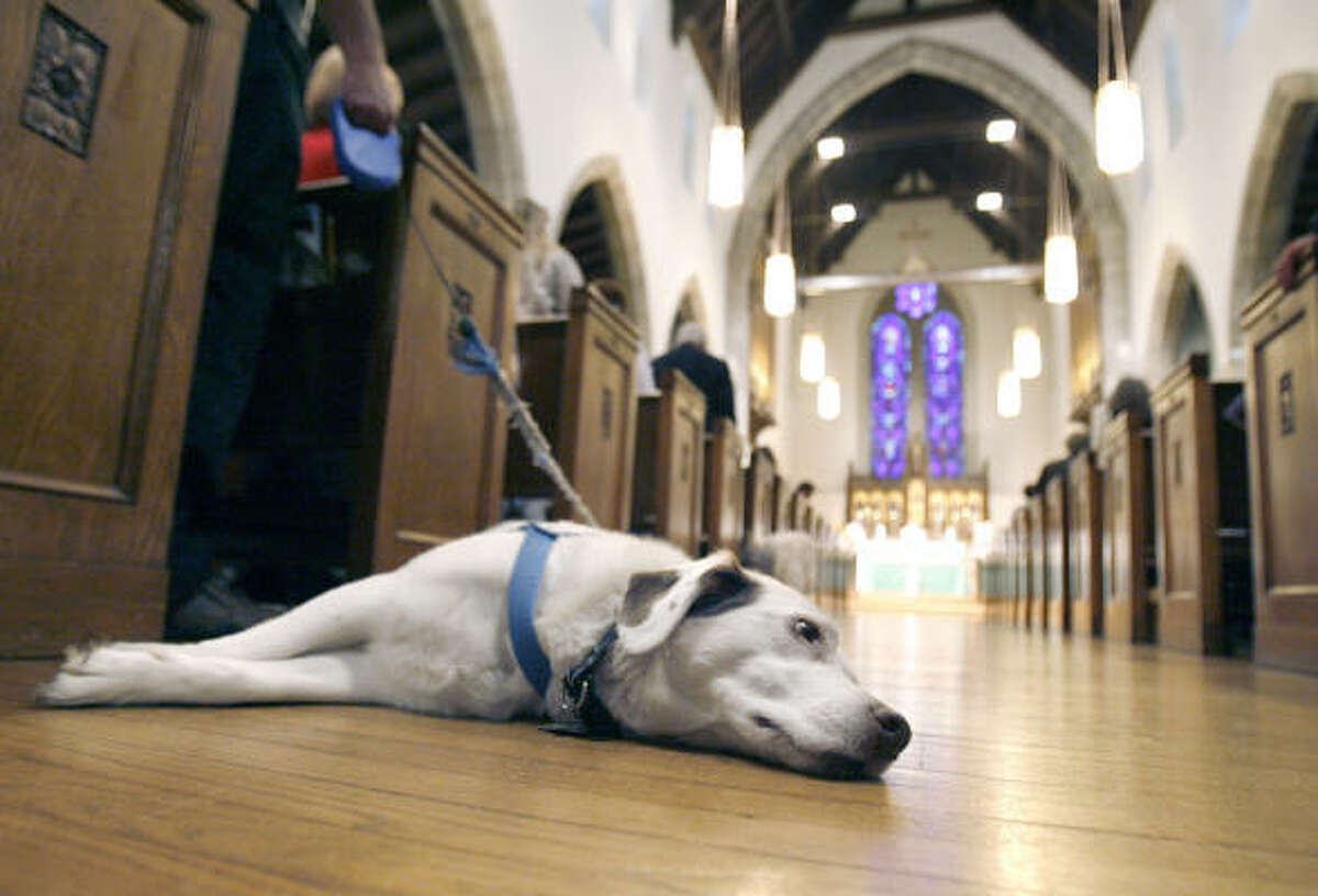 Mark Lothrop's dog Sadie rests on the floor of St. Paul's Episcopal Church waiting for the St. Francis Blessing of the Animals that concluded the service Sunday in Canton, Ohio.
