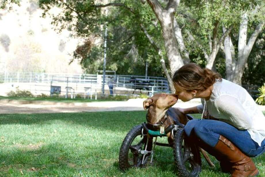 Alyssa Milano and her dog, Scooby-Roo, who uses a wheelchair. Photo: AP