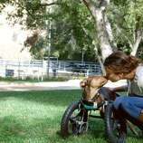 Alyssa Milano and her wheelchair-bound dog Scooby-Roo.