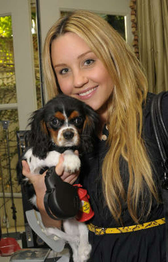 Amanda Bynes and Charlie Photo: Charley Gallay, Getty Images