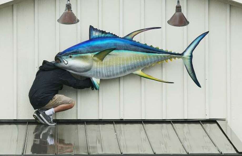 A man installs a large fish back onto the front of a resturant after Hurricane Earl on September 3, 2010 in Kill Devil Hills, North Carolina. Hurricane Earl was downgraded to a category 2 before brushing the Outer Banks early Friday morning causing minimal damage. Photo: Mark Wilson, Getty Images