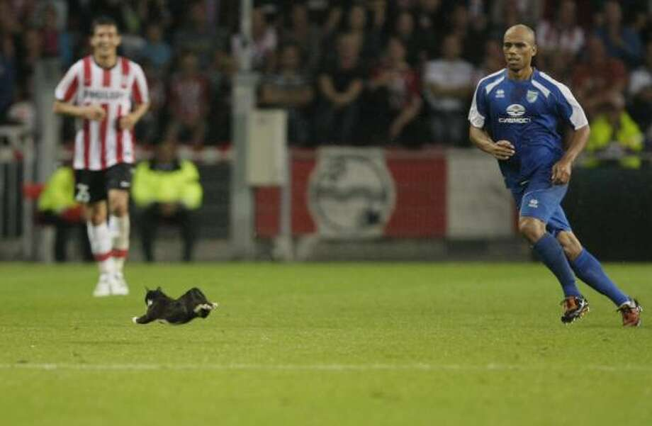Sibir player Joseph-Reinette Steev, right, chases a cat that ran on the pitch during the Europa League qualifying round soccer match PSV vs. Sibir Novosibirsk in Eindhoven, Netherlands Aug. 26. Photo: PETER DEJONG, AP
