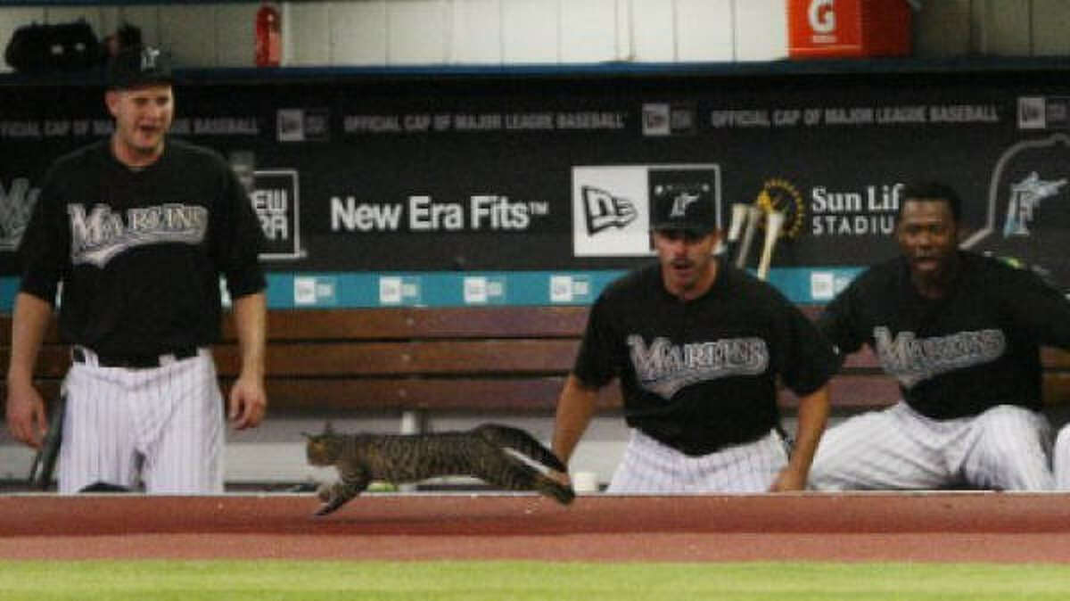 Florida Marlins' Chris Volstad, left, Brian Barden, center, and Hanley Ramirez look on as a cat runs onto the field during the second inning of a baseball game against the Cincinnati Reds Monday.