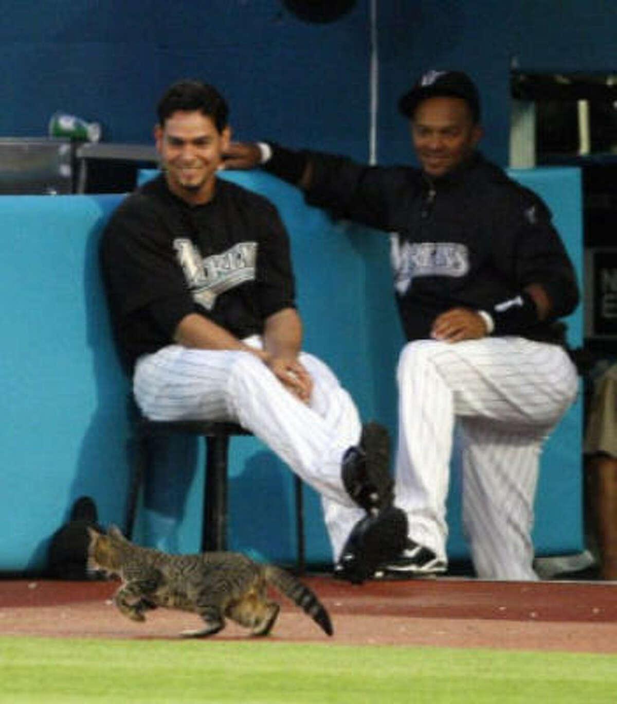 Anibal Sanchez, left, and Emilio Bonifacio don't seem disturbed by the cat sighting.