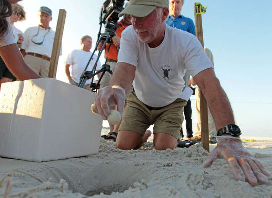 John Oliver gently lifts a sea turtle egg from its nest and places it in a cooler after harvesting them from the sand in Port St. Joe, Fla., on Friday, July 9, 2010. Photo: Dave Martin, AP